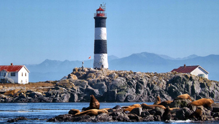 6-seals-and-sealions-at-race-rocks-t