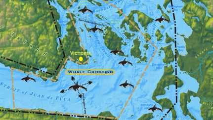 whale-map-of-salish-sea-t